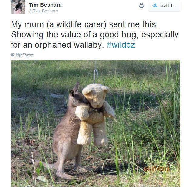 テディベアをギュっと抱きしめるカンガルーの赤ちゃん! 可愛くってちょっぴり切ないショットに世界が注目