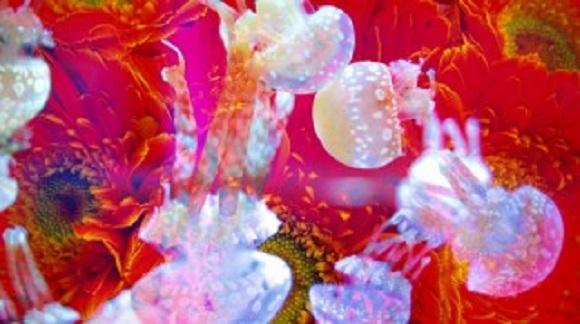 すみだ水族館のクラゲが極彩色に染まるですとッ…! 蜷川実花プロデュースの「クラゲ万華鏡トンネル」が楽しみすぎると話題に