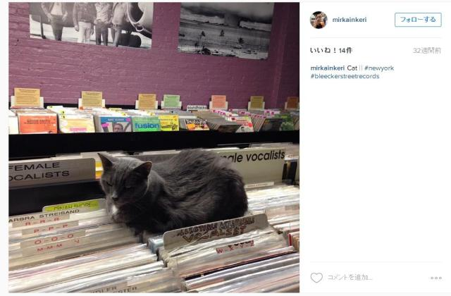 【癒し】猫がいるレコード屋が可愛すぎてたまらん……毎日通って見つめたい!