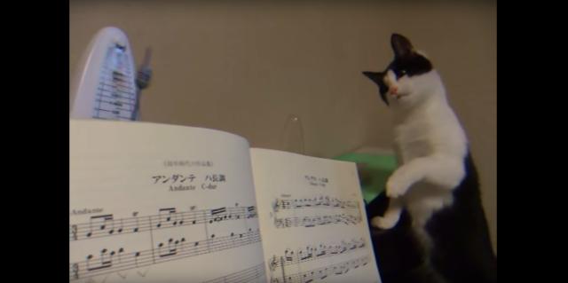 【抑えきれニャイ好奇心】「なんなのこれ??」メトロノームが気になって仕方がない子猫の可愛すぎるリアクション