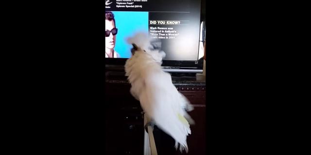 踊らずにはいられない! 鳥さんたちがノリノリになっちゃう「好きな曲ベスト3」はこれだっ!!