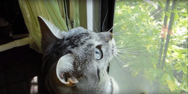 【猫とセミの夏休み】「セミさん行っちゃった…」別れが辛すぎるネコが今年もお母さんに八つ当たりしてた