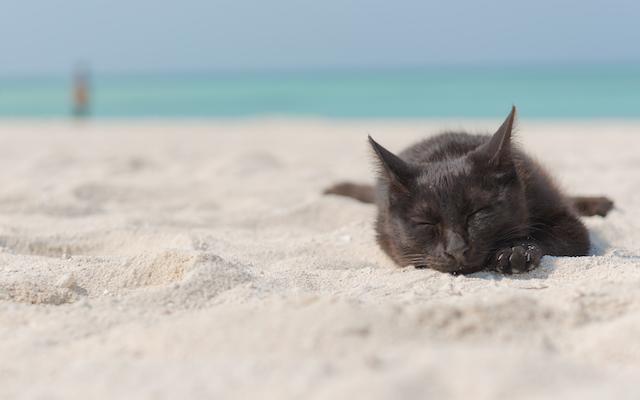 青い空・透き通る海・そしてニャンコ~!! 沖縄・竹富島など全国の島で暮らす「島ねこ」写真集で癒やされまくり~♪