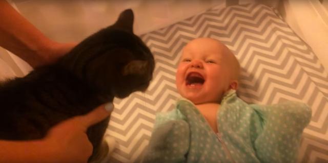 【再生回数500万目前】無類のネコ好き赤ちゃんが「ネコ来たー!!!」と大はしゃぎする様子がネットで大人気! / ネットの声「本当にネコが好きなんだね」