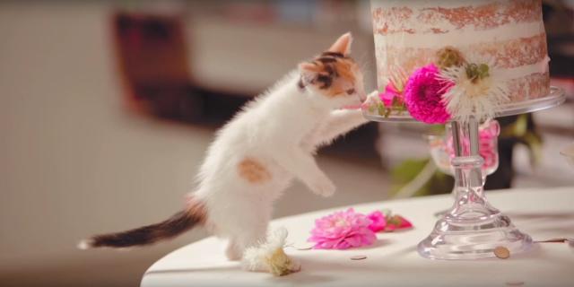 【こんな結婚式いかが?】くぅ…猫好きにはたまらない「猫がテーマの結婚式」が可愛すぎる〜!!!