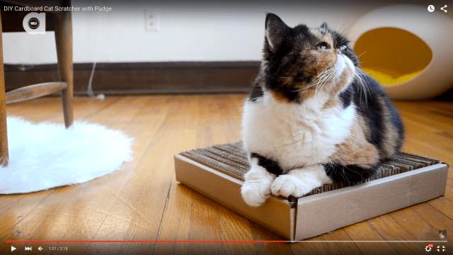 【にゃんこの為のDIY】靴の箱のふたでつくる「お手製爪研ぎ」がネコにもエコにもいい感じ!