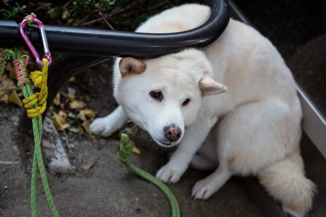 【台風・地震】災害対策はペットも一緒に……日頃から飼い主が準備しておくべきこととは?