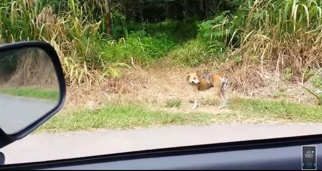 「犬猿の仲」なんてもうナンセンス!? 背中に子ザルをのせてけもの道を進むワンコの後ろ姿がクールです!