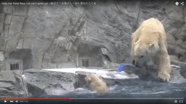 大変〜!! 泳げない子グマが水に落ちちゃった! 即座にお母さんグマがとった行動に「母性を感じる」「イカン、涙でそう」との声
