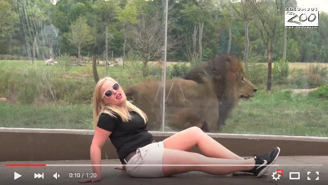 動物たちと一緒に名演技!? テイラー・スウィフトさんのMV「Wildest Dreams」を動物園スタッフがパロディー化してみた!