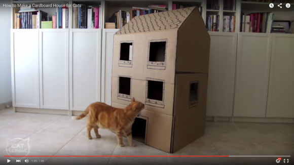 cathousediy1