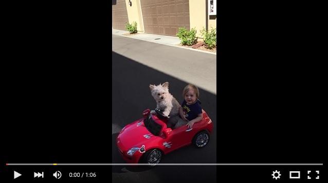 華麗なドライビングテクを披露するワンコがスゴすぎる!! ワンコと男の子のドライブ姿がめちゃくちゃキュートな動画