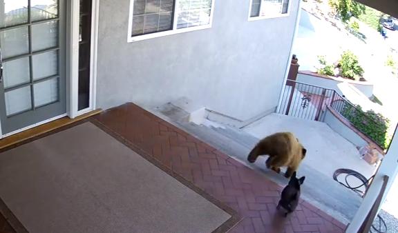 【驚き】家にやってきた2匹のクマ! 絶体絶命のこの瞬間を救ったのは…なんとフレンチブルドッグ!?