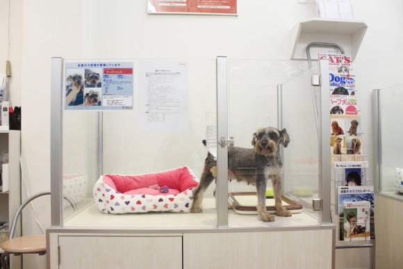 保護された犬たちとも出会える! 保護犬の譲渡活動を行うペットショップが世田谷経堂に新オープン