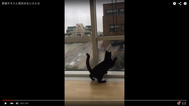 【ほっこり】窓拭きおじさんのお手伝いをする黒猫、一緒に窓を拭き拭きする様子に「とっても楽しそう」「なんて素敵な交流なの」と世界中がほんわか♪