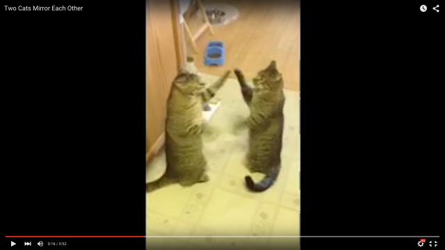 鏡にじゃれついている猫さんかと思いきや…2匹が完全にシンクロ?? 「圧倒的にニャンタスティック!」「これ好きだわ」