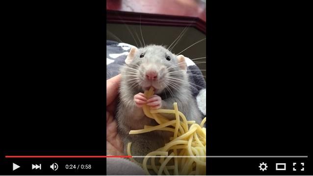 【愛くるしい】パスタをハグハグ食べる赤ちゃんネズミが超キュートな動画! コレ、実写版『レミーのおいしいレストラン』や!!