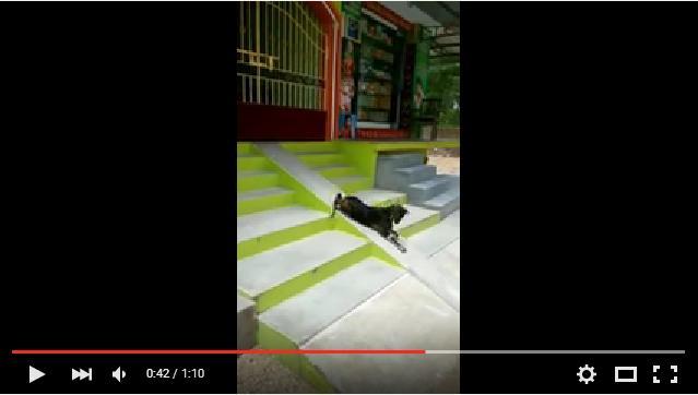 【癒し動画】「すべり台遊び」に夢中の黒ヤギさんが可愛いっ! 何度でも滑り続けるよ!