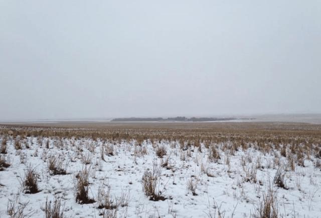 【驚き】写真の中にいるのは550頭の羊たち! 見つけられるかな!? カナダの大平原の写真が世界中で話題に☆
