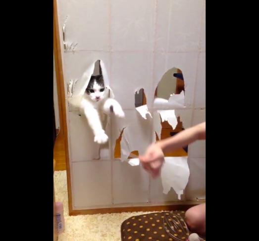 【猫たちの憧れ】猫の手を借りた「障子破り」がとっても楽しそうとTwitterで話題 /「いかん…楽しそうだ…」「可愛い~♪」