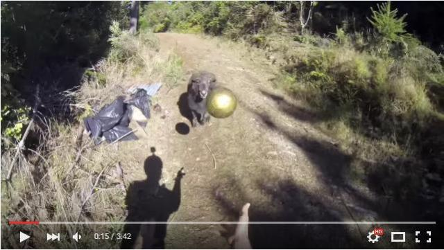 「ボール遊びならまかせとけ!!」ヘディングを何度も繰り返して遊ぶ、楽しそうな羊さんの姿をご覧あれ★