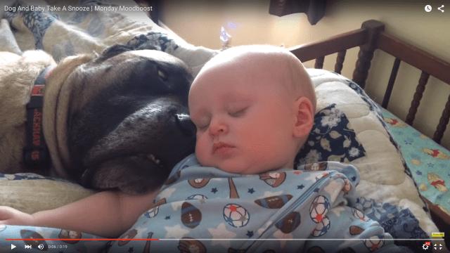 寄り添ってスヤスヤ眠るワンコと赤ちゃんがそれぞれ違う意味でかわゆい / ネットの声「狂おしいほど愛らしい」