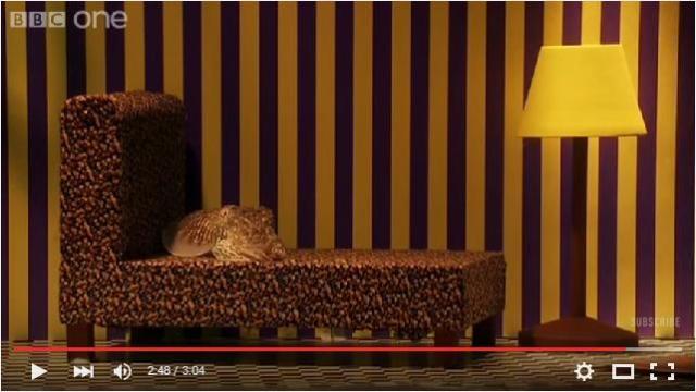 海のカメレオン「コウイカ」はリビングルームにも同化できるのか? その擬態能力を実験してみたところ…!?