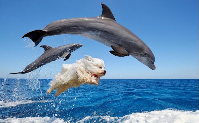 【面白コラ画像】ジャンプするワンコが七変化!? 海外のPhotoshopバトルに登場した秀逸作品をご覧あれ