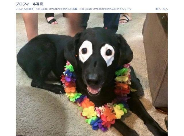 """白班で """"逆パンダ顔"""" になった真っ黒な犬が「カワイイ」と話題に / ネットの声「キュンとした」「この顔好き」"""