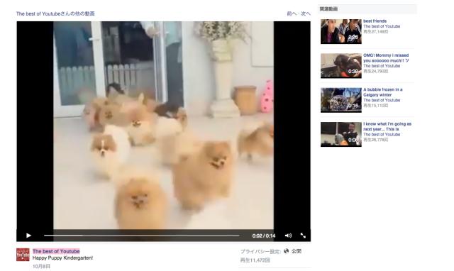 【ポメ☆パラ】まるで羊の群れ? ドドド〜ッと「もふもふちゃんたち」が流れ出すポメラニアン・パラダイスな動画が鼻血もんデス