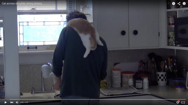 「ちゃんと洗えてる?」お父さんにぶら下がってお皿洗いを監視してくれる猫さんが可愛い!なぜか前足はキチンと胸ポケットにインしています