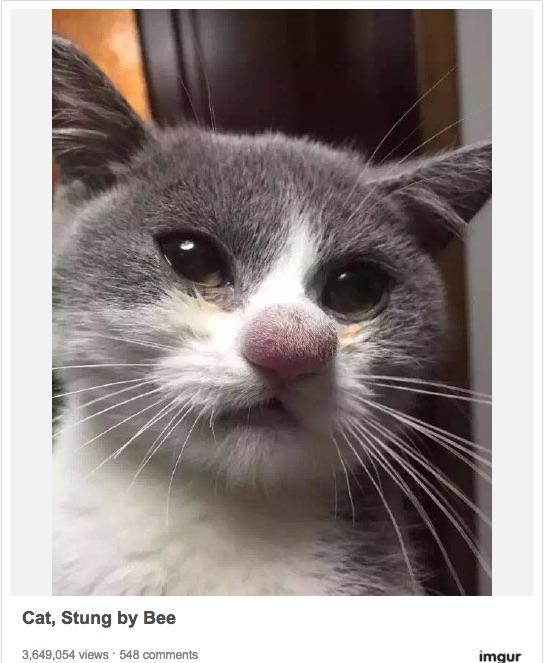 【お大事に】ウソみたいに腫れてる…! ハチに刺された猫ちゃんたちのキュートでトホホな画像集