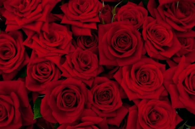 12月12日は「ダズンローズデー」というロマンチックな記念日♪ 恋人に12本のバラをプレゼントする日なんだよ!