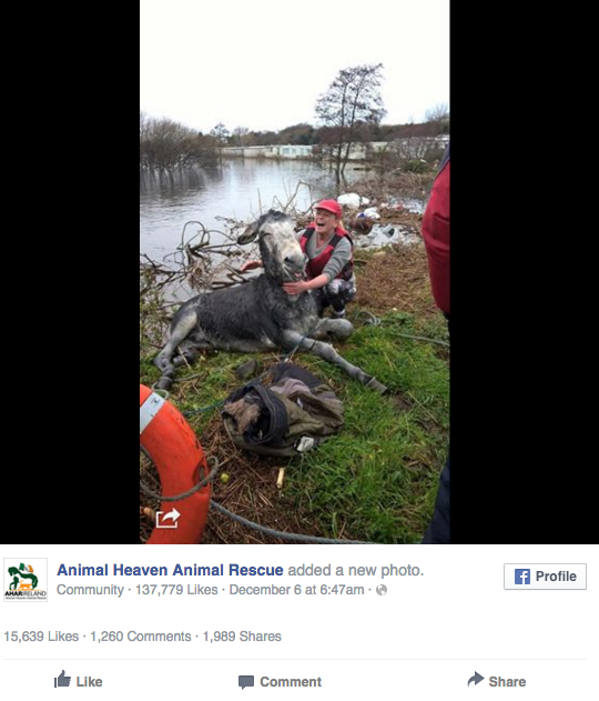 【よかったね!】アイルランドで溺れていたところを救助されたロバの「俺ってばホントドジ☆」みたいなナイスな表情が話題に