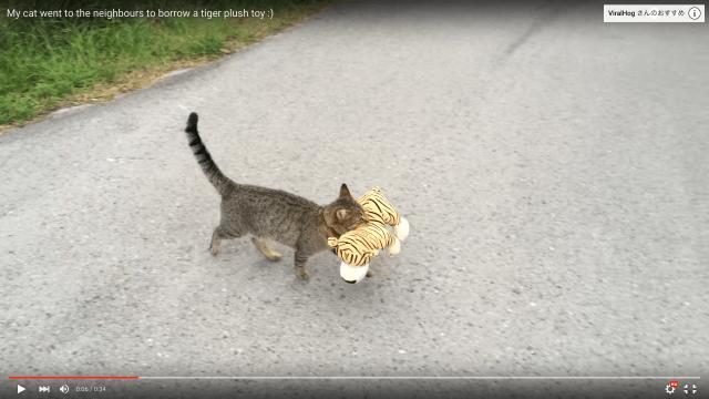 【怪盗にゃんこ参上】お隣さん宅からぬいぐるみを頂戴してきちゃった猫さんの「誇らしげな表情」が可愛いと話題です♪