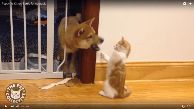 子犬 vs 子猫の可愛すぎるガチバトル! キュートさでは引き分け!? ネットの声「これはずるい!」