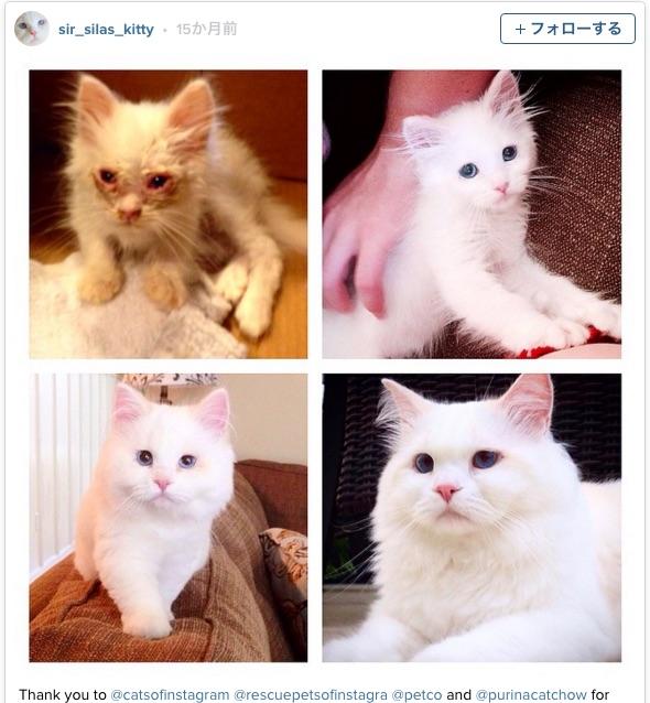まさに猫界のシンデレラボーイ! 道路に捨てられた子猫がもっふもふの美猫さんに大変身!! 「すげぇもふもふ」「息をのむような美しさ」と大絶賛されてます♪