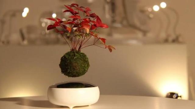ラピュタは本当にあった…!? 宙にフワリと浮いている「空中盆栽」が九州から登場! 世界から注目を集めているようです