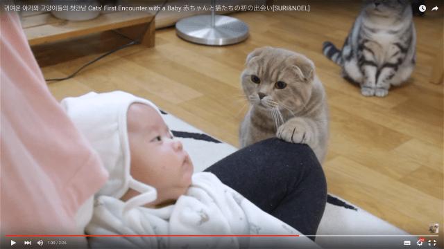 「お前は一体何者だ…!」はじめて見た人間の赤ちゃんに5匹の猫たちがざわついている様子がたまらなくカワイイ♪