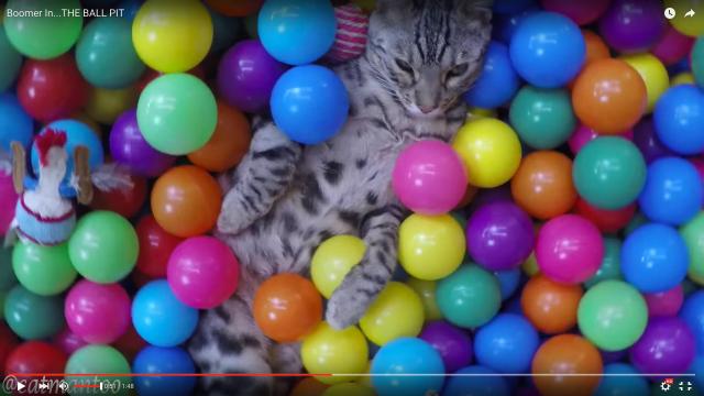 【猫と遊ぼう】これは真似してみたい! 猫の好奇心に火をつける方法〜ボールプール編