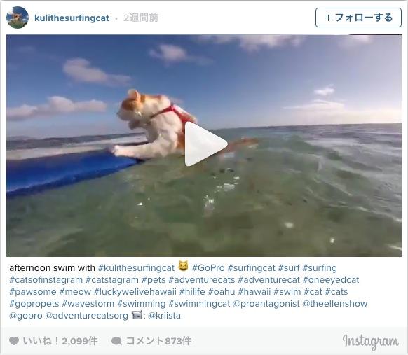 猫かきでスイスイ…ライドオン! 海が大好きな片目のニャンコ、地元ハワイ・ホノルルでサーフィンを楽しむの巻