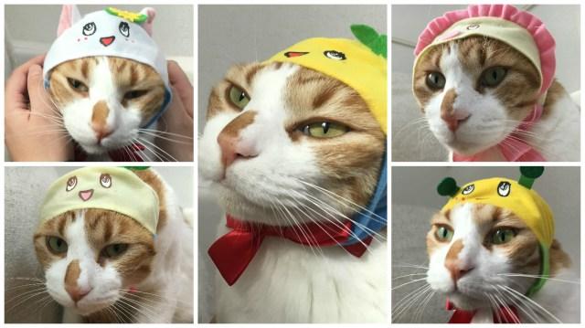 【かわいいなっしー!!】かわいいかわいい猫用「ふなっしー」かぶりもの全5種類! 猫にかぶせたら「ニャッハー!!!」してくれるか調査してみた結果…