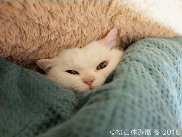 ニャンコたちは冬でもぬくぬくニャ! 冬休みがテーマのネコ写真&物販展「ねこ休み」が始まるよぉ~♪