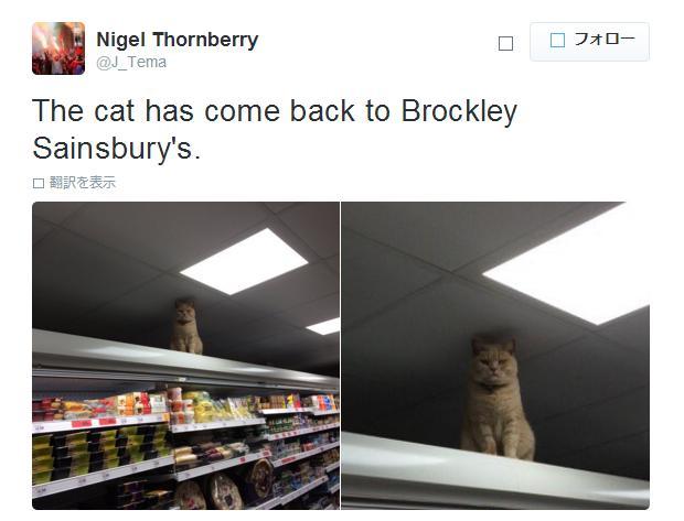 """超仏頂面!! ロンドンのスーパーに居着いた """"番猫"""" さんは今日も厳しい目でお客さんを見ています"""