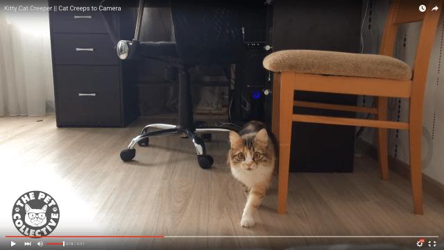 猫に狩られるときの「ドキドキ感」を味わえる動画がマジで怖すぎる!!! 怖いのに可愛いので何度も観ちゃう中毒性アリ