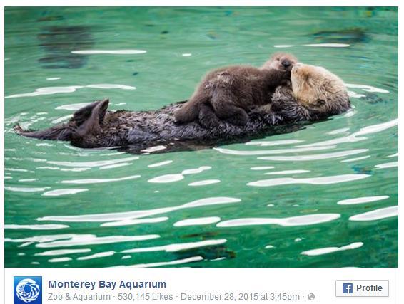 嵐から逃れて水族館に避難した野生のラッコに赤ちゃん誕生! モフモフの毛並みにほっこり&幸せな気持ちに