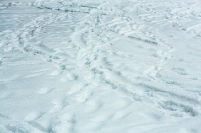 1月14日は「愛と希望と勇気の日」だよ! 映画「南極物語」で有名なワンコ・タロとジロが南極で発見された日なんだよ〜!