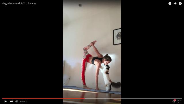 【胸キュン動画】ヨガのポーズ中に「なーにやってんの?」と猫が近づいてきた! この後の行動がキュン死ぬ〜!!