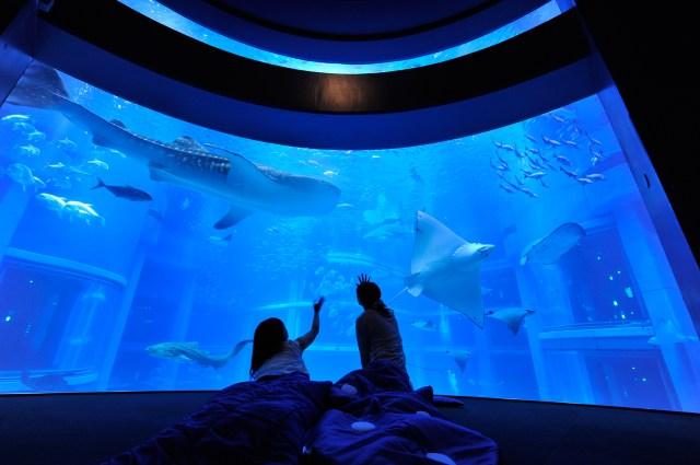 夜の水族館でペンギンやイルカと一緒に「おやすみ〜☆」 / 大阪・海遊館「お泊まり女子会」の参加者を募集中だよ