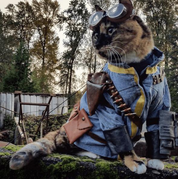 【進撃の巨人からポケモンまで】猫の「男前コスプレ」がInstagramで話題! / 100%飼い主の趣味に付き合ってくれる表情がイイ味出てます♪